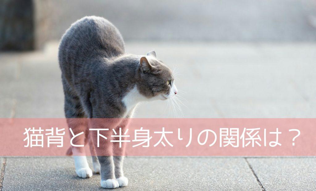 猫背を治す努力を始めた結果、脚痩せに近づいた!