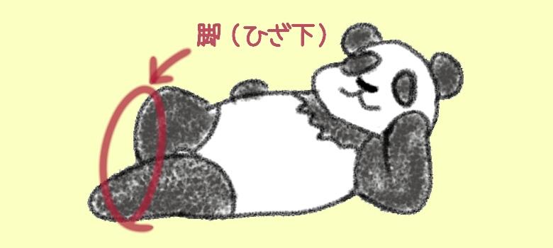 《イラスト》パンダのひざ下