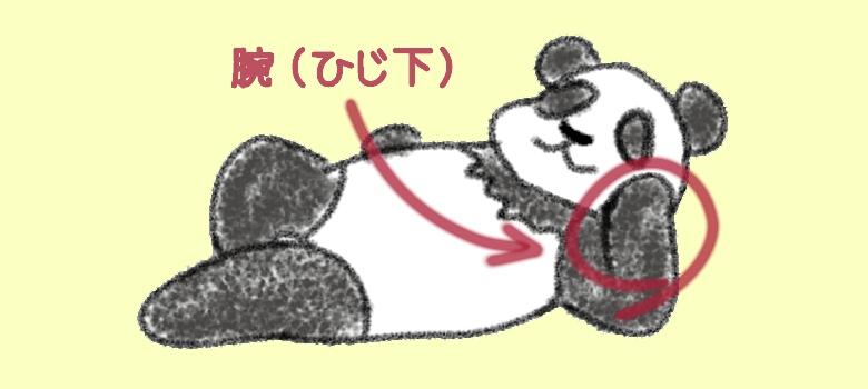 《イラスト》パンダのひじ下