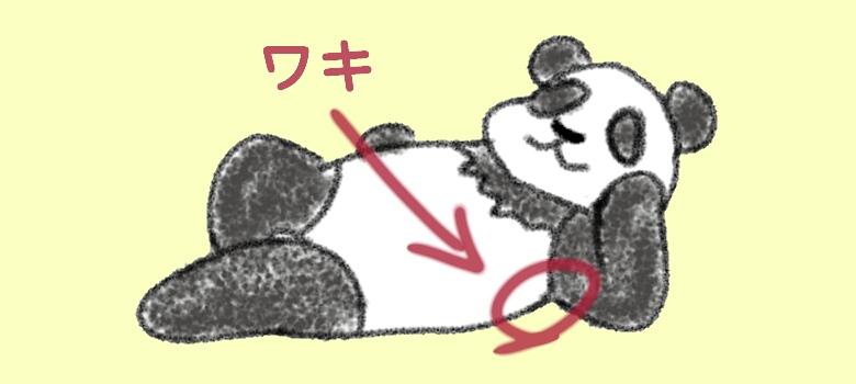 《イラスト》パンダのワキ