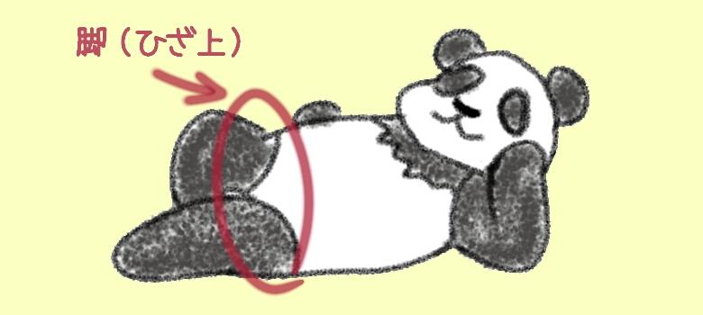 《イラスト》パンダのひざ上