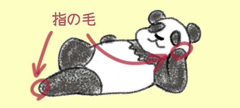 《イラスト》パンダの指の毛