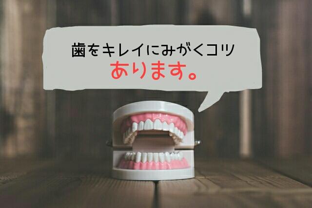 【誰でも簡単】今日からできる「歯みがきのコツ」を2つご紹介
