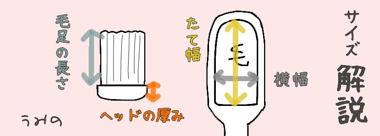 《イラスト》歯ブラシのサイズ解説